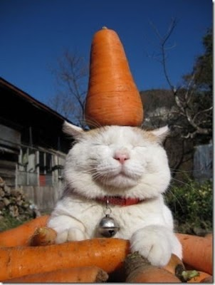 kucing+keren-imut-lucu-menggemaskan-imroee-2.jpg