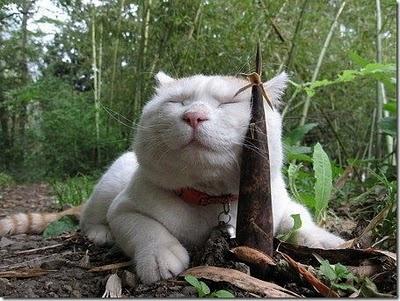 kucing+keren-imut-lucu-menggemaskan-imroee-3.jpg