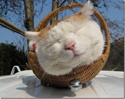 kucing+keren-imut-lucu-menggemaskan-imroee-5.jpg
