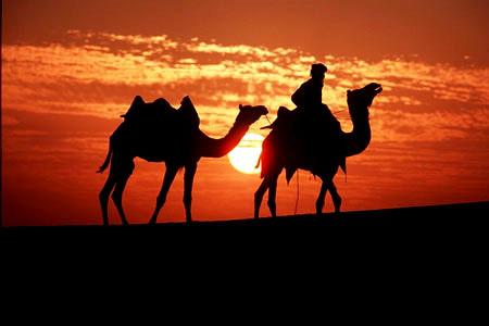 camels_desert.jpg